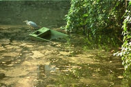 fish-pond with half-sunk boat and heron